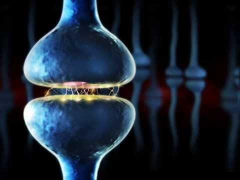 Un gen vincula el riesgo de enfermedad psiquiátrica con menor número de sinapsis